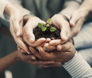 manos-planta-juntos